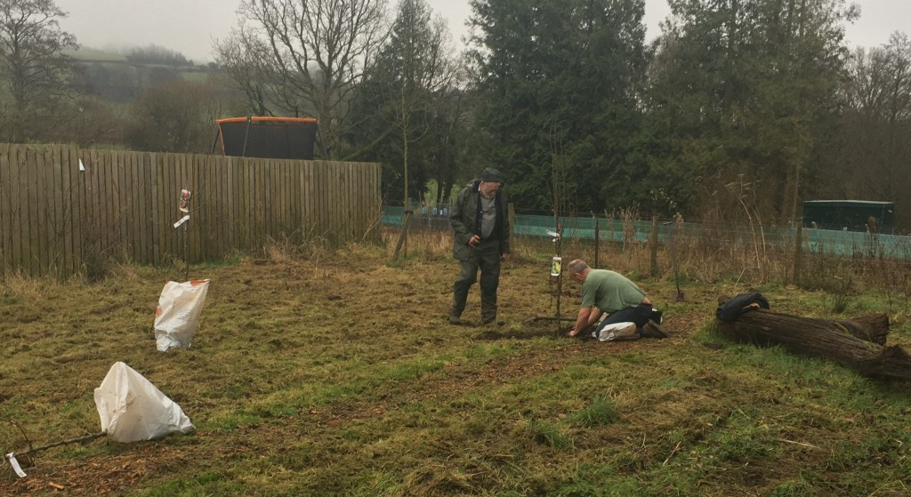 Nature Garden - planting of pear and apple tree